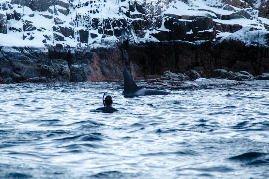 1-Orca-BAR_4221