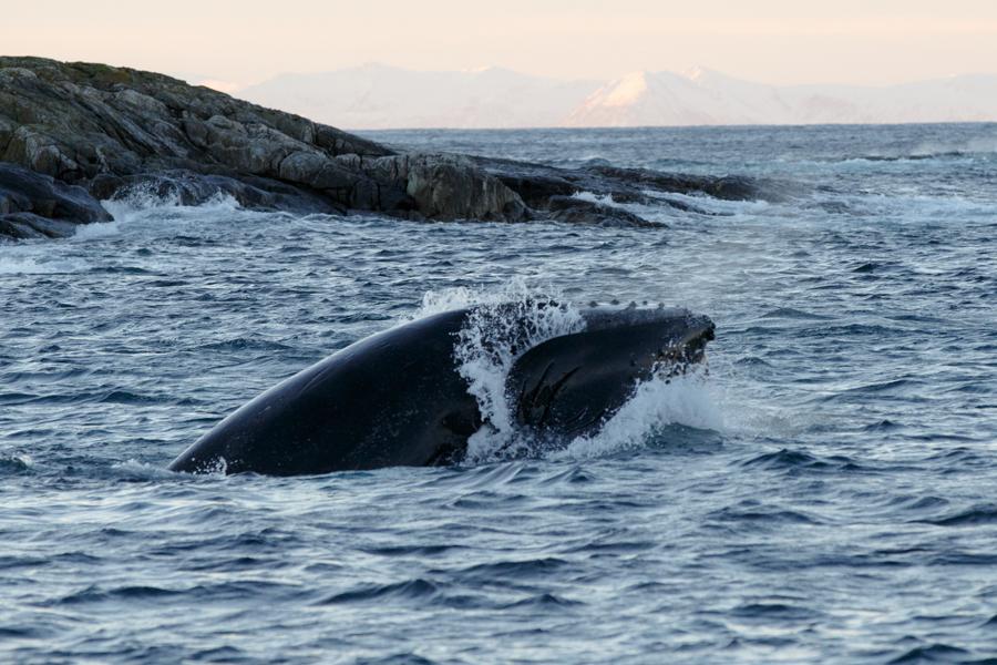15-Orca-BAR_5933