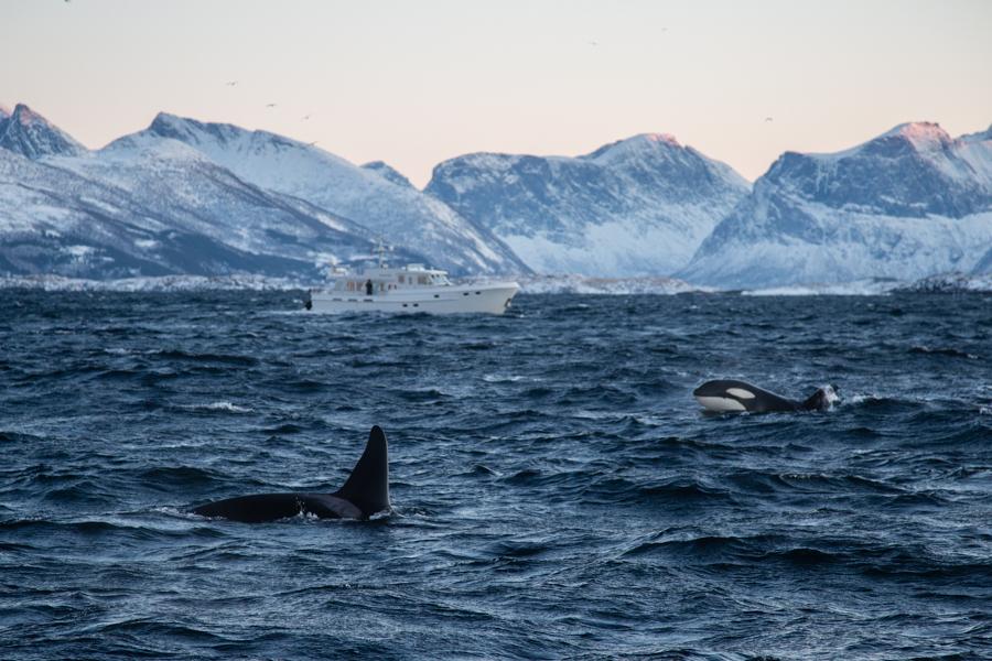5-Orca-BAR_4768