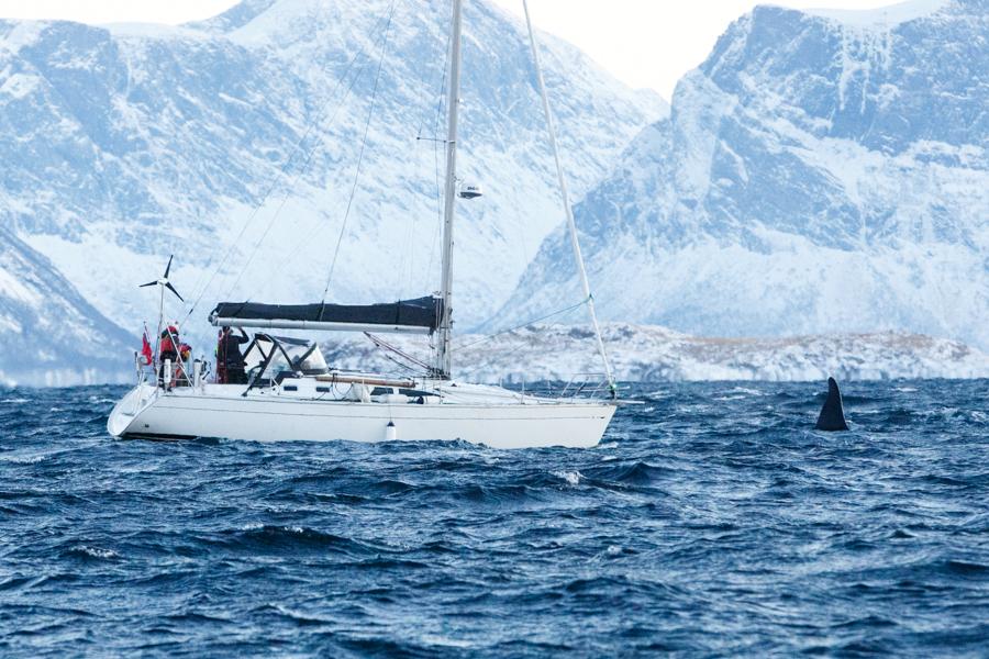 6-Orca-PV8C2664